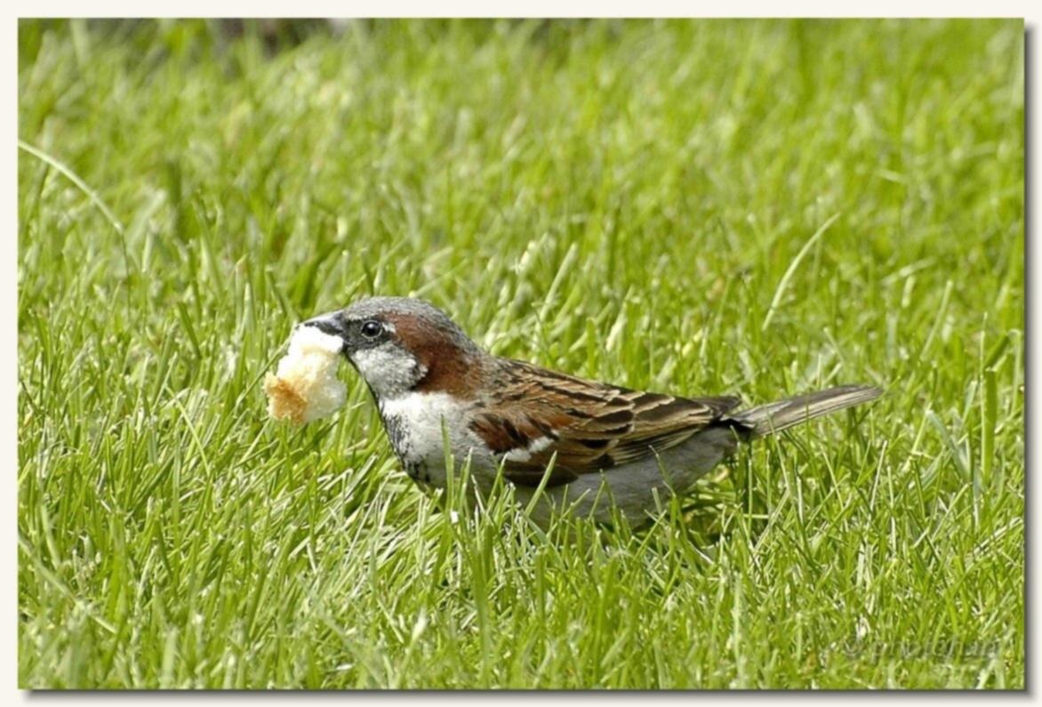 Oiseaux des jardin animaux divers for Jardin des oiseaux