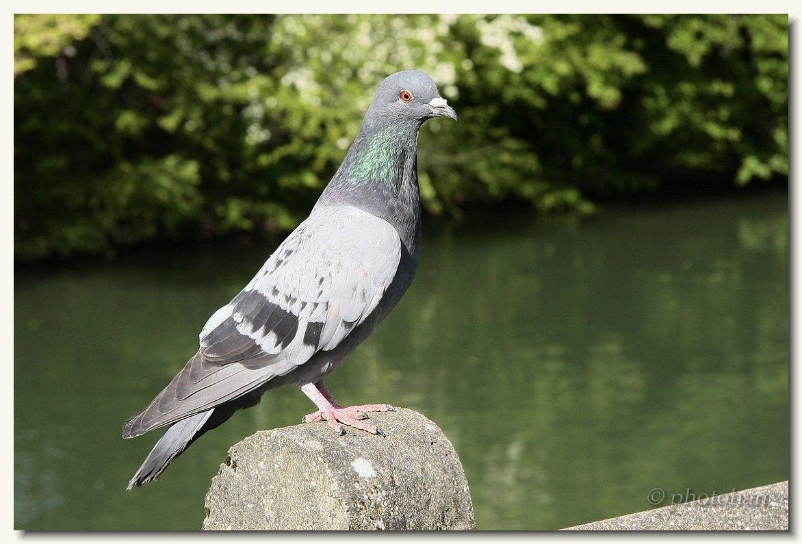 oiseaux des jardin animaux divers